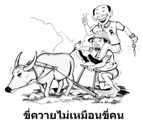 buffalo_sm