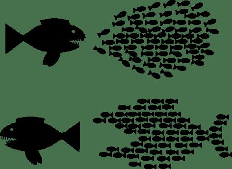 organise-fish-solidarity-hi