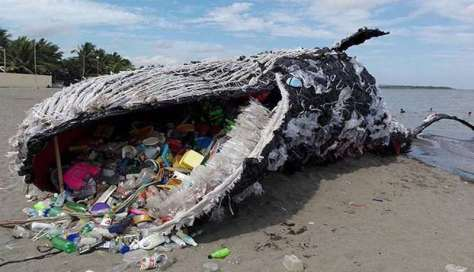 Plastic-Pollution-kills-another-Whale-1
